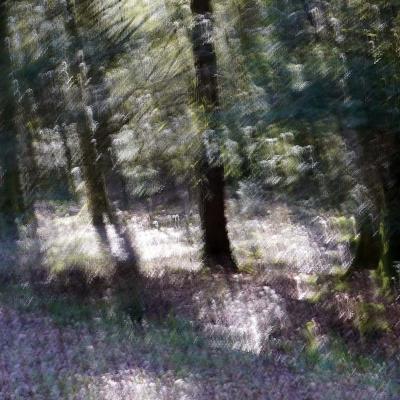 27-Forêt d'Ecouves, sous bois. TIRAGE 3/4 et 4/4 DISPONIBLE