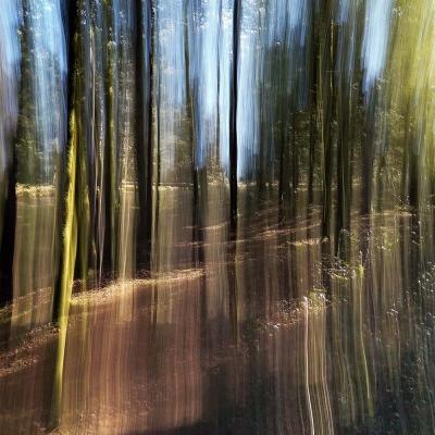 28-Forêt d'Ecouves. Transparence. EPUISE