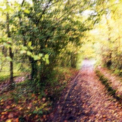 Rêve d'automne (1) Deuxième choix internautes