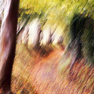 Rêve d'automne (3). Premier choix internautes