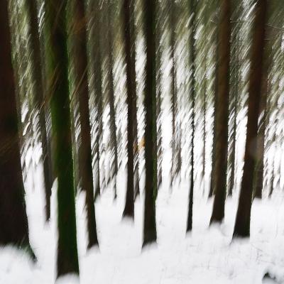 Rêve de neige (7)